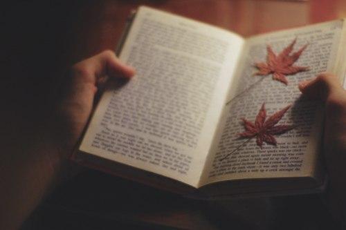 """""""Пташка співоча"""": роман із турецькою екзотикою"""