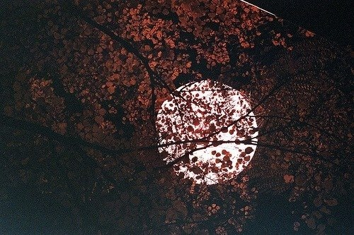 ''Все те незриме світло'' Ентоні Дорр: розплющте очі і побачте якомога більше, перш ніж вони заплющаться навіки
